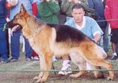 Lukas van Noort - 1ra.Cat Machos Selec VA1